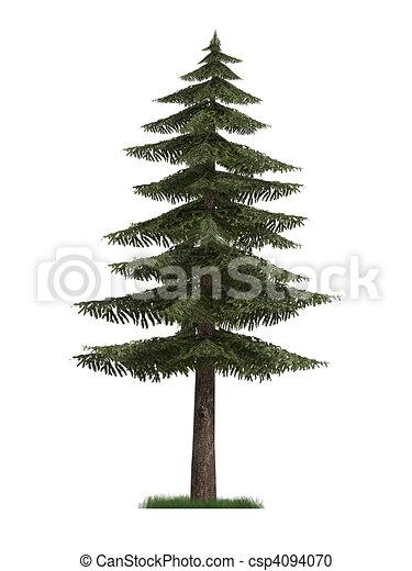Abete modello albero 3d albero abete isolato fondo for Disegno 3d free