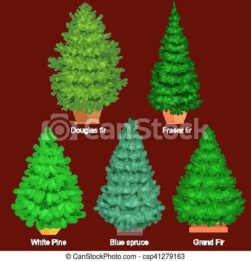 Abeto rbol hoja perenne conjunto como sin decoraci n for Ver fotos de arboles de hoja perenne