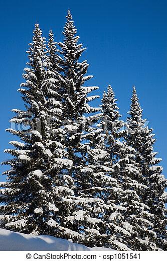 abeto, árvores. - csp1051541