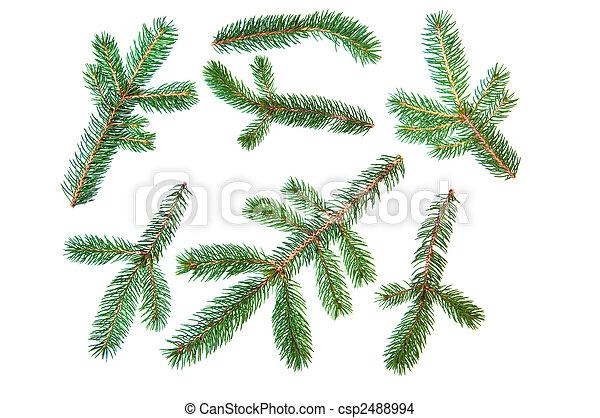 Abeto conjunto rbol pino rama rbol hoja perenne for Ver fotos de arboles de hoja perenne