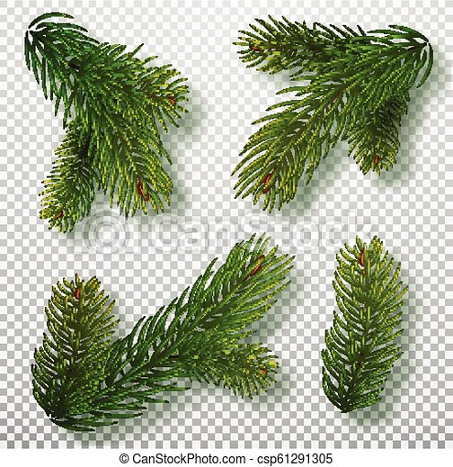 Las ramas de los árboles de Navidad para una decoración de Navidad. Primer plano de las ramas. Colección de ramas de abeto. Ilustración vectorial realista aislada en el fondo - csp61291305