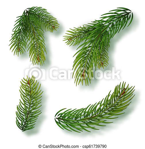 Las ramas de los árboles de Navidad para una decoración de Navidad. Primer plano de las ramas. Colección de ramas de abeto. Ilustración vectorial realista aislada en el fondo - csp61739790
