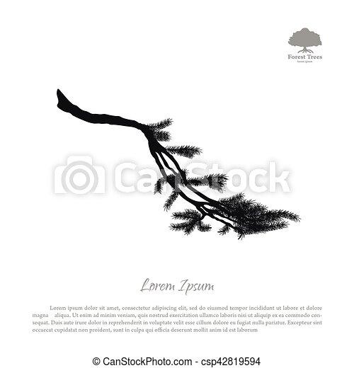 Abeto Silueta árbol Pino Fondo Negro Ramas Blanco Dibujo