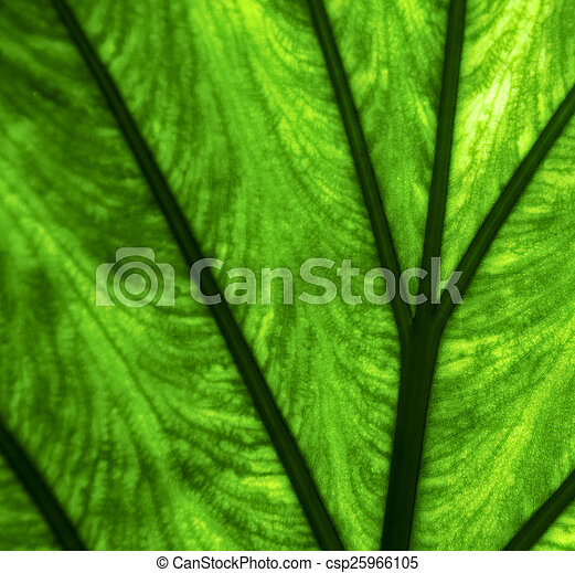 abstract background macro close up of a green - csp25966105