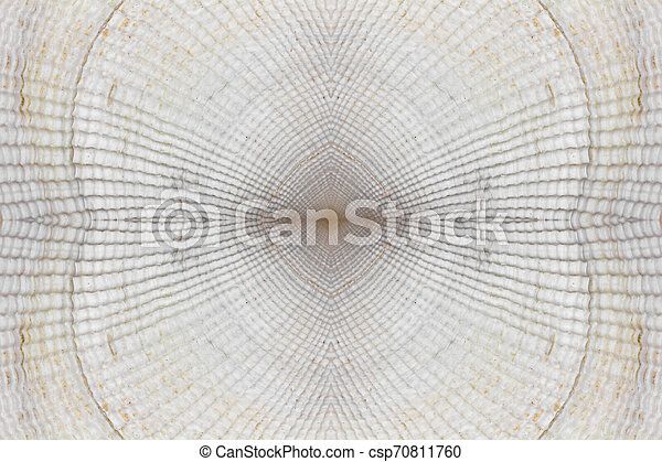 abstract background texture of white seashells - csp70811760