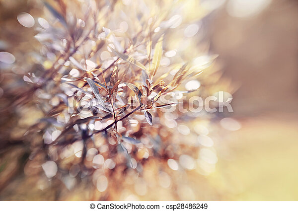 Abstract background with bokeh with branches of willow. - csp28486249