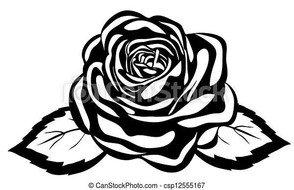 Abstract Black And White Rose Close Up Isolated On White Background