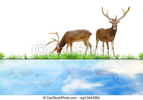 Abstract Deer Abstract Deer Eating Grass On White