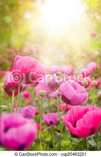 abstract Floral background  - csp20463221