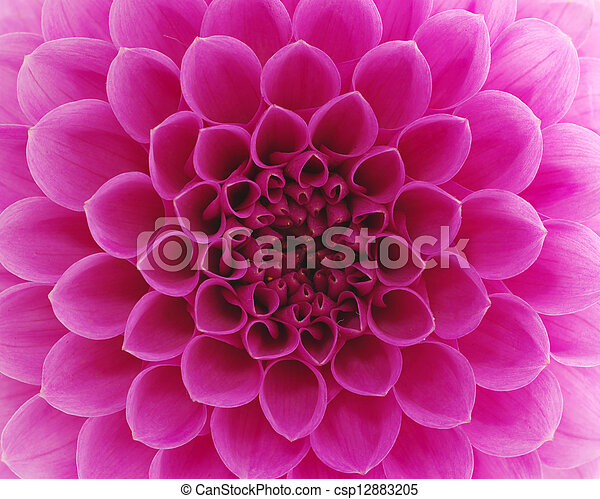 stock photography of abstract flower and beautiful petals cs