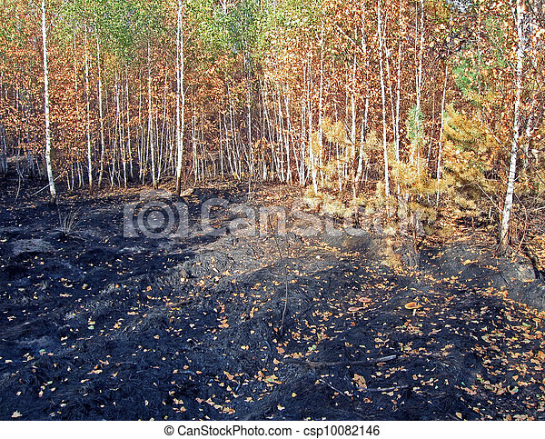 Abstract Forest After Fire Stress Environment Details