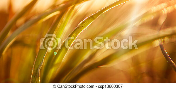 Abstract Grass Background - csp13660307