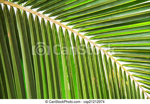 Abstract green leaves background - csp21212974