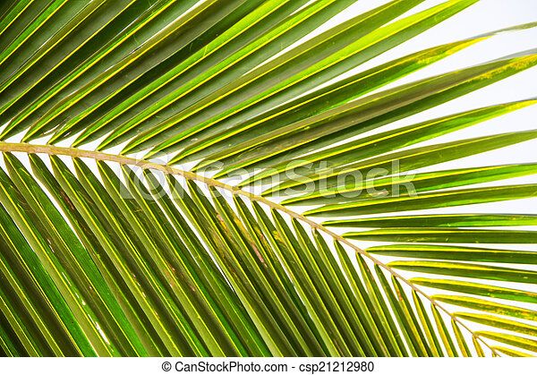 Abstract green leaves background - csp21212980