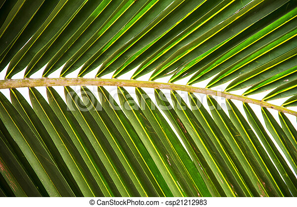 Abstract green leaves background - csp21212983