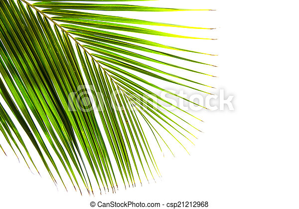 Abstract green leaves background - csp21212968