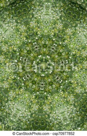 Abstract greenery background, green leaves with kaleidoscope effect - csp70977852