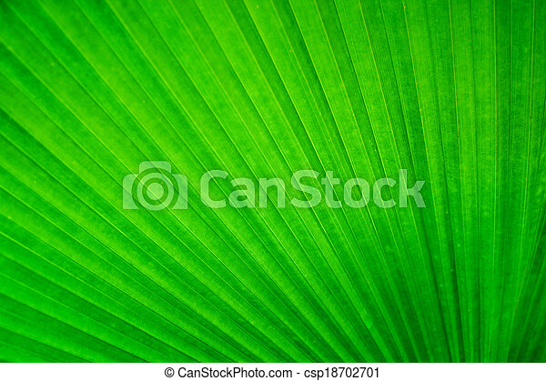Abstract image of Green Palm leaves in nature - csp18702701