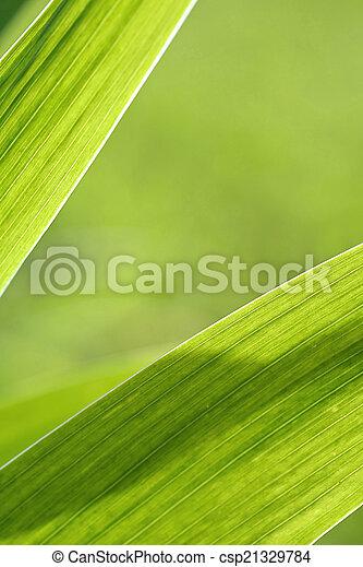 Abstract iris leaf background - csp21329784