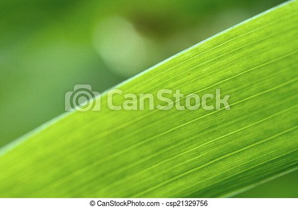 Abstract iris leaf background - csp21329756