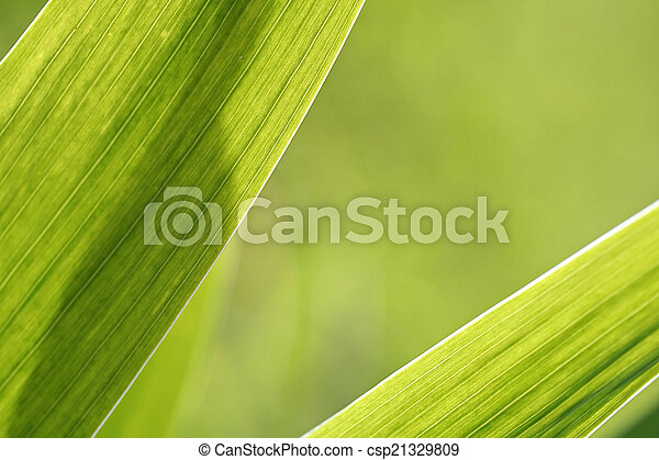 Abstract iris leaf background - csp21329809