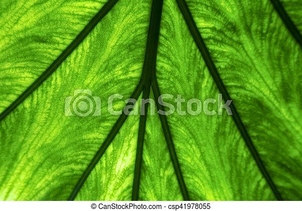abstract macro close up of a green - csp41978055