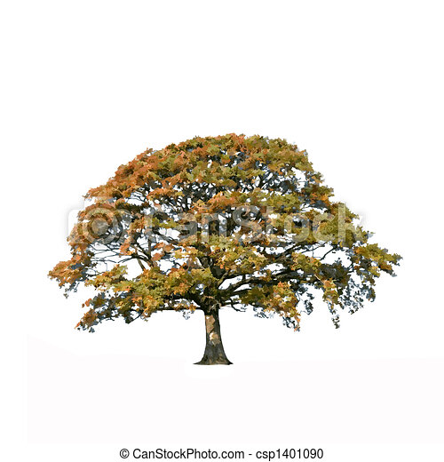 Abstract Oak Tree in Fall - csp1401090