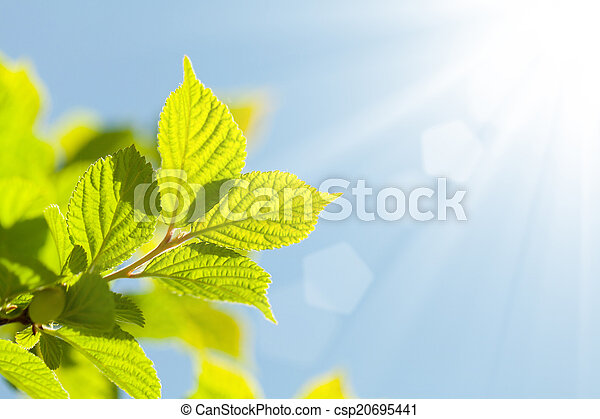 Abstract summer background with green leaves - csp20695441