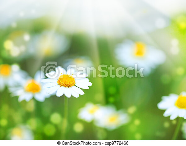 Abstract summer backgrounds with daisy flowers - csp9772466