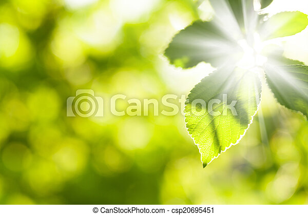 Abstract summer bokeh with green leaves - csp20695451