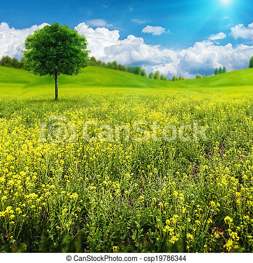 Abstract summer natural landscape with alone tree on the beauty meadow - csp19786344