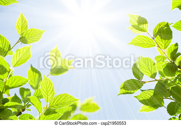 Abstract sunny summer bokeh background with green leaves - csp21950553
