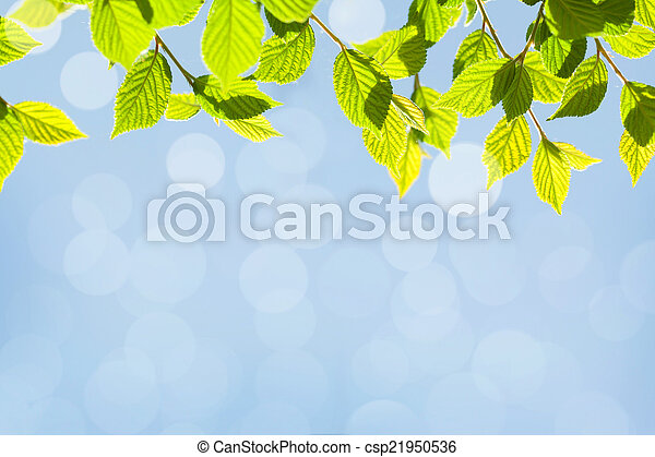 Abstract sunny summer bokeh background with green leaves - csp21950536