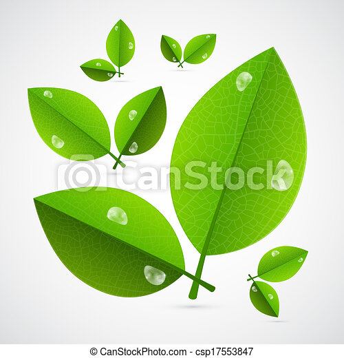 Abstract Vector Green Leaves Isolated on White Background - csp17553847