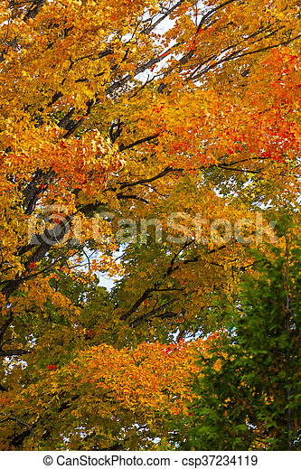 abstract view of colorful fall foliage - csp37234119