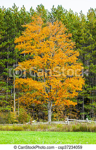 abstract view of colorful fall foliage - csp37234059