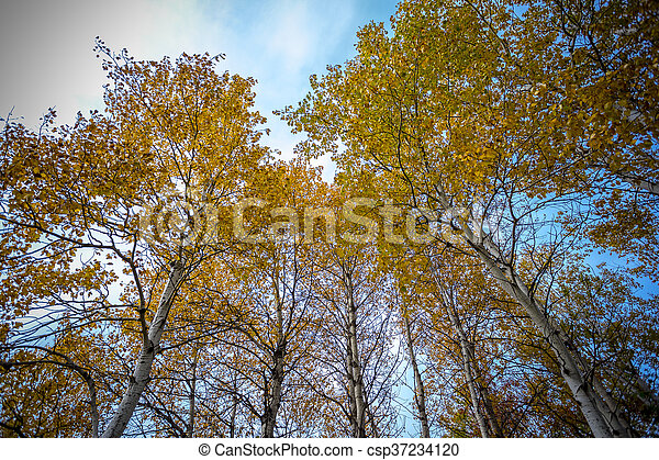 abstract view of colorful fall foliage - csp37234120