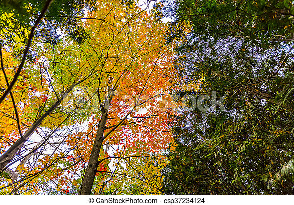 abstract view of colorful fall foliage - csp37234124
