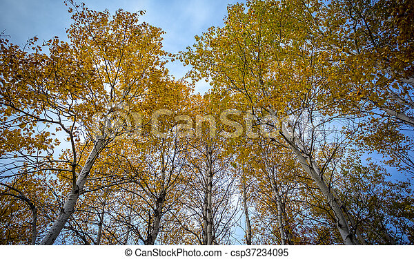 abstract view of colorful fall foliage - csp37234095
