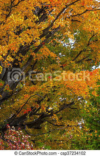 abstract view of colorful fall foliage - csp37234102
