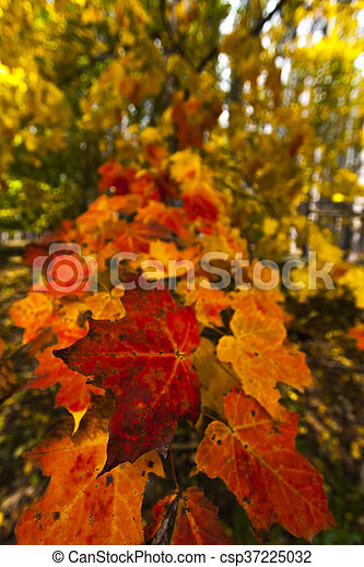 abstract view of colorful fall foliage - csp37225032