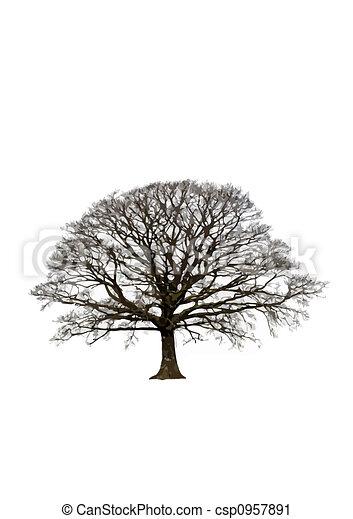 Abstract Winter Oak Tree - csp0957891