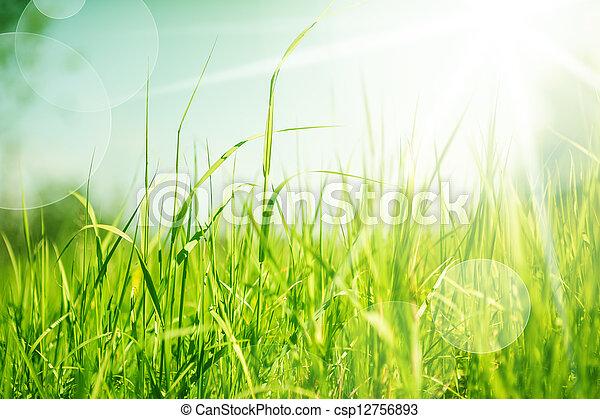 abstrakt, gras, hintergrund, natur - csp12756893