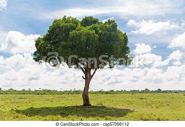 Acacia árbol Africano Sabana Fauna Concepto Mara Naturaleza