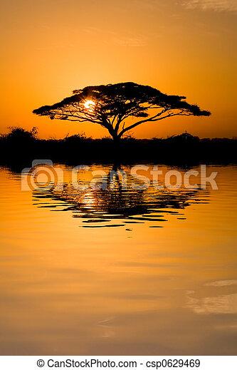 Acacia Tree at Sunrise - csp0629469