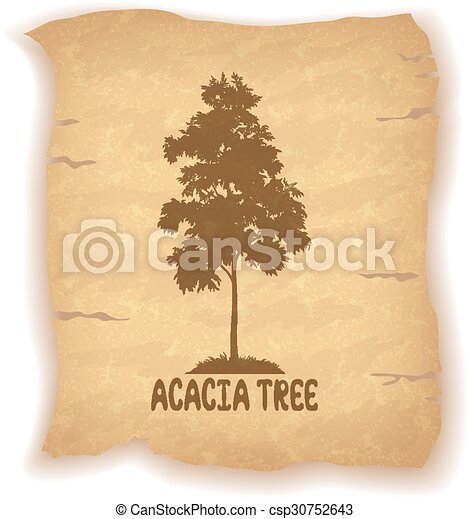 Acacia Tree on Old Paper - csp30752643
