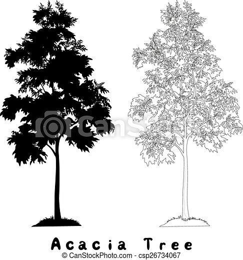 Acacia tree silhouette, contours and inscriptions - csp26734067
