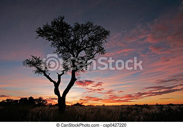 Acacia tree silhouette - csp0427220