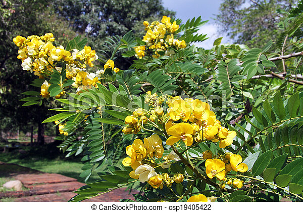 Branch Of Acacia Tree With Yellow Flowers Stock Photo Search