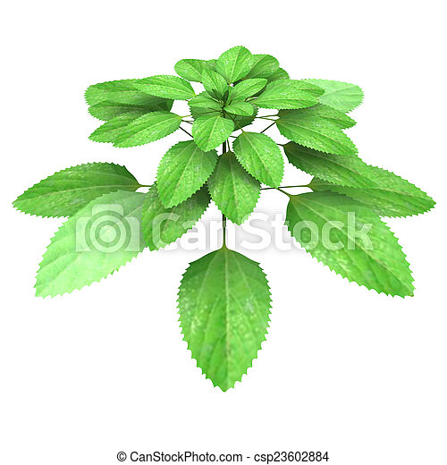 Acalypha Indica Is A Species Of Plant Having Catkin Type Of
